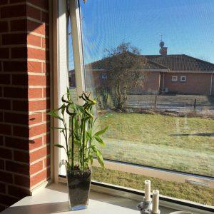 Rullnät fönster
